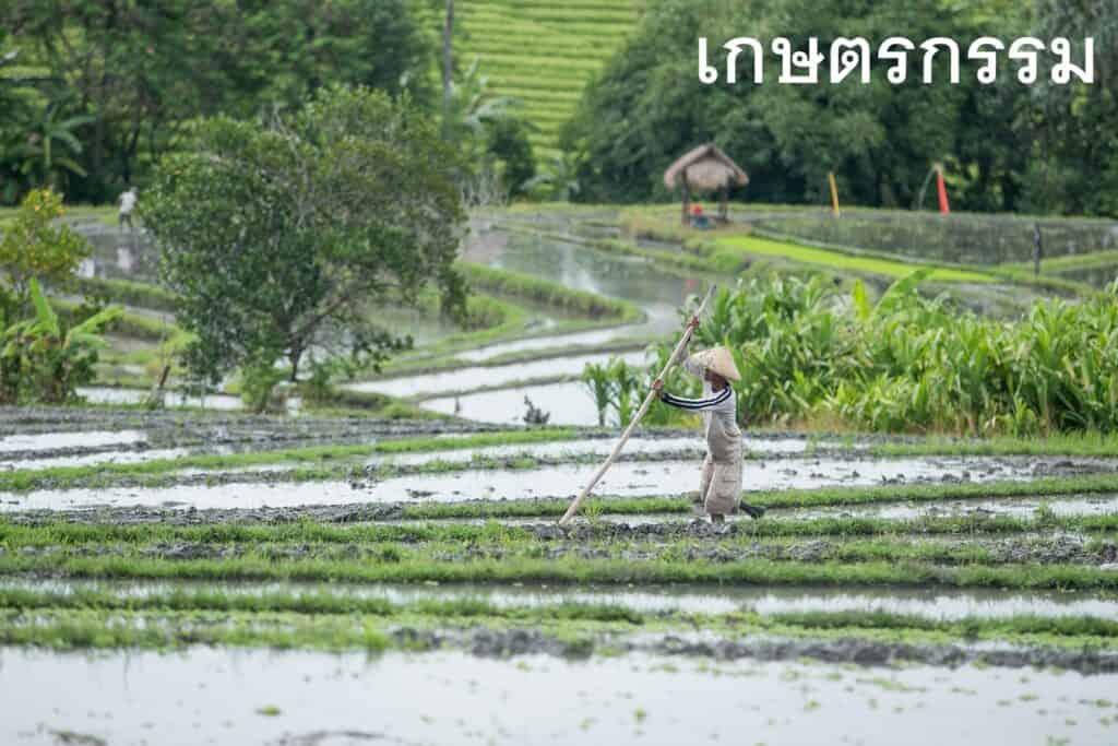 เกษตรกรรม