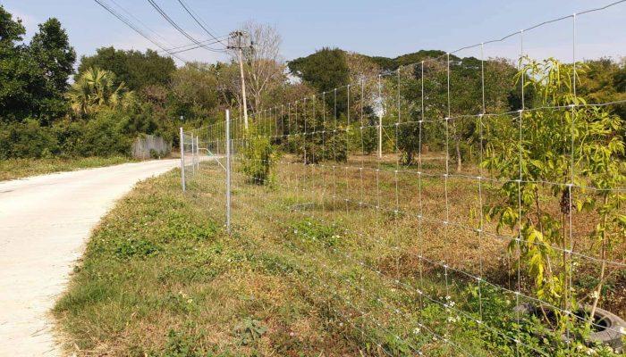 ตัวอย่างที่ 6 การใช้งานรั้วล้อมสวน