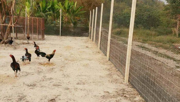 ตัวอย่างที่ 3 การใช้งานรั้วล้อมไก่