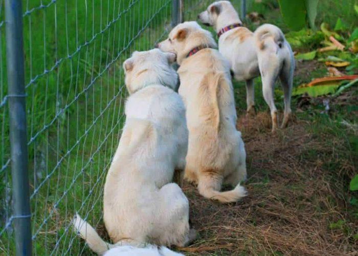 ตัวอย่างที่ 4 การใช้งานรั้วสุนัข