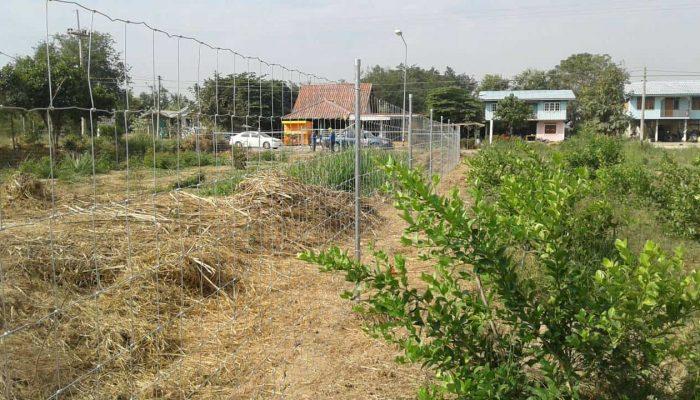 ตัวอย่างที่ 1 การใช้งานรั้วล้อมสวน